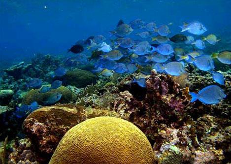 海底風光 | 檸檬鯊潛水